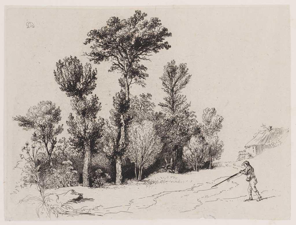 Bomengroep (no:40)