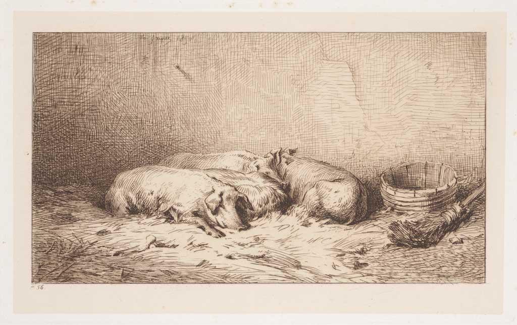 Slapende varkens