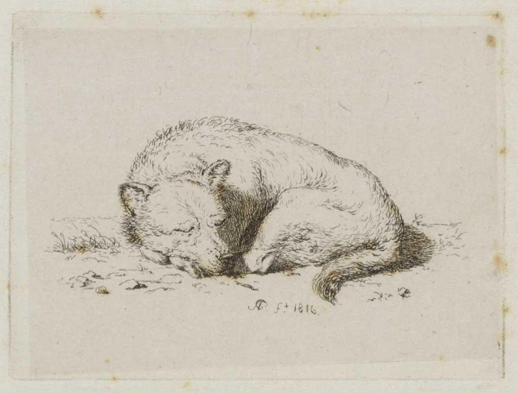 Studie van een slapende hond