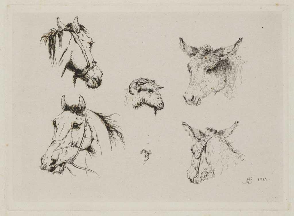 Studie van paardenhoofden, ezelskoppen en een geitekop