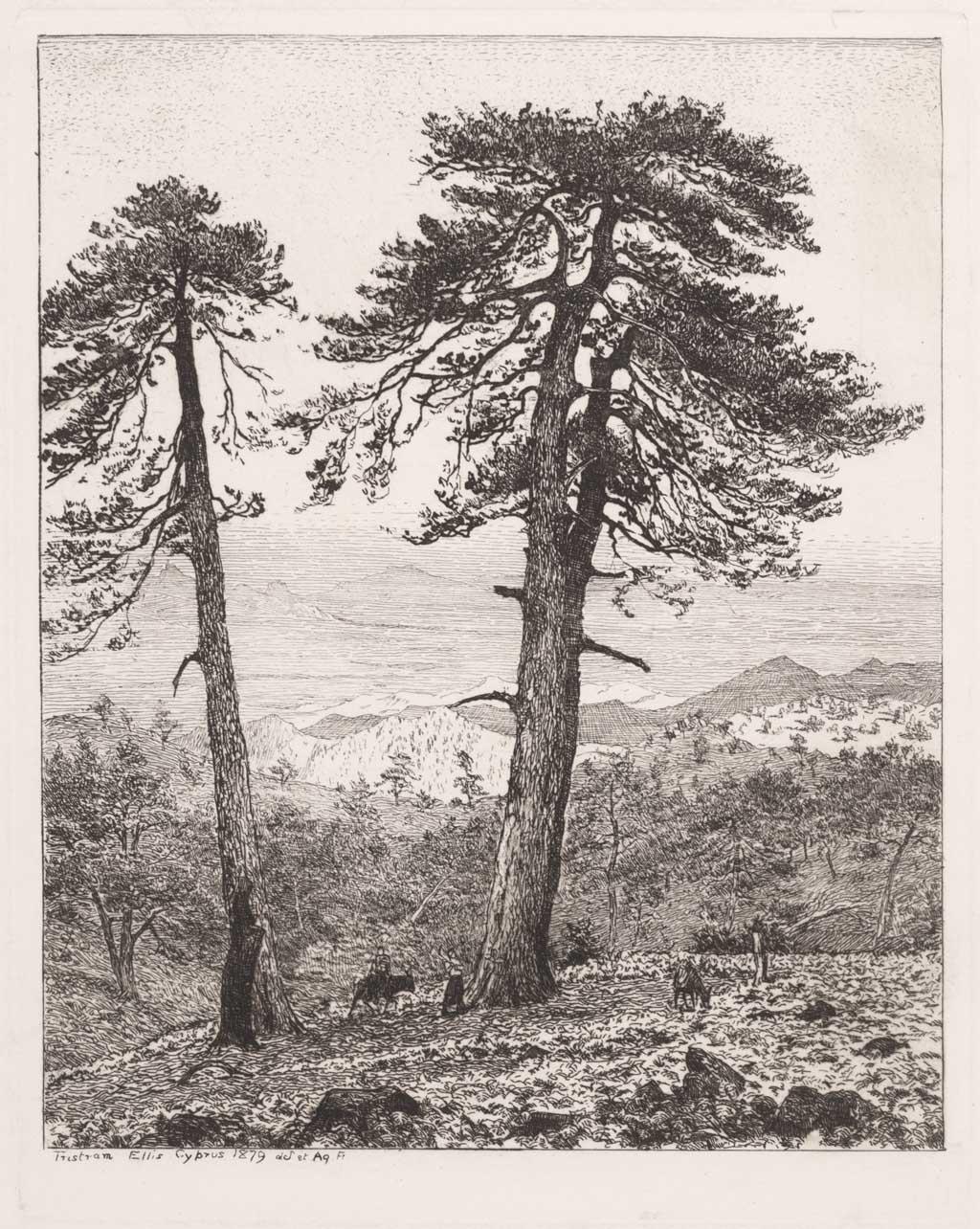 Landschap op Cyprus