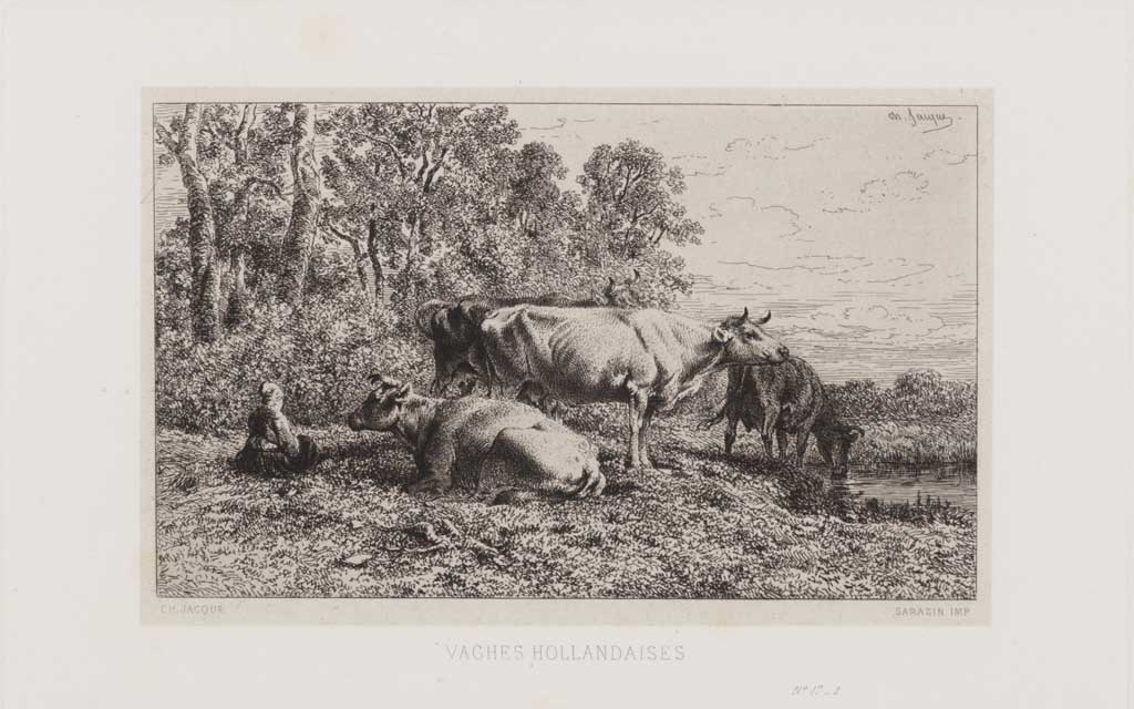 Vaches Hollandaises