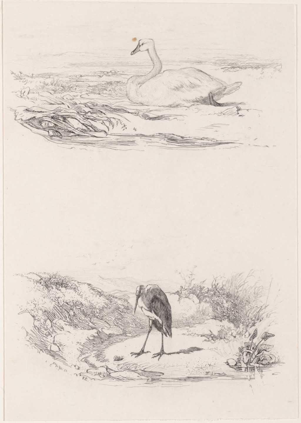 Zwaan en ooievaar