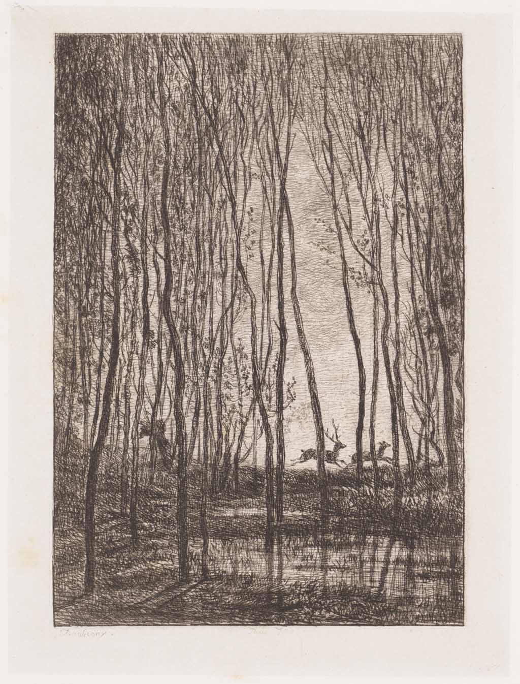 Bos met meertje