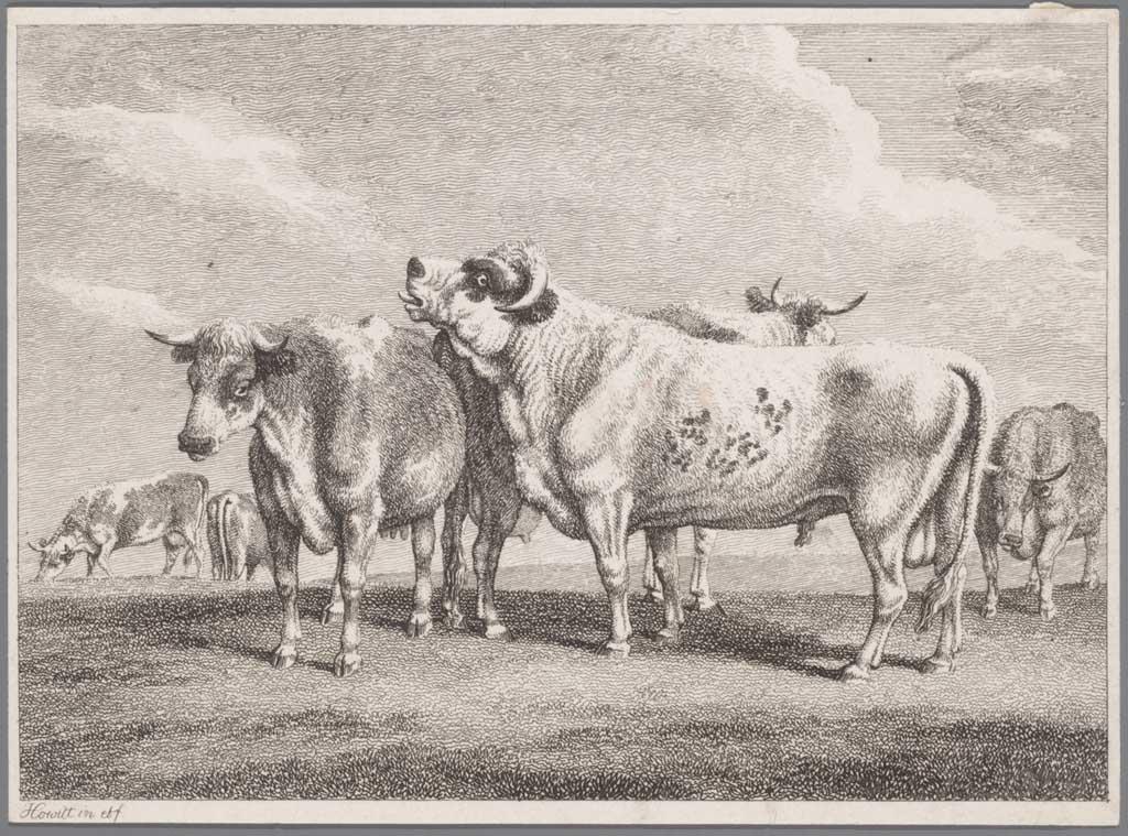 Een groep runderen in een weiland