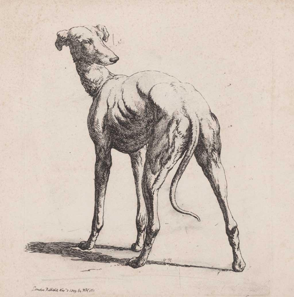 Hond van achteren gezien
