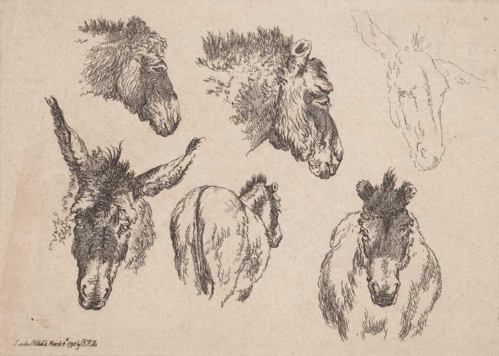 Zes studies op één plaat van een ezel
