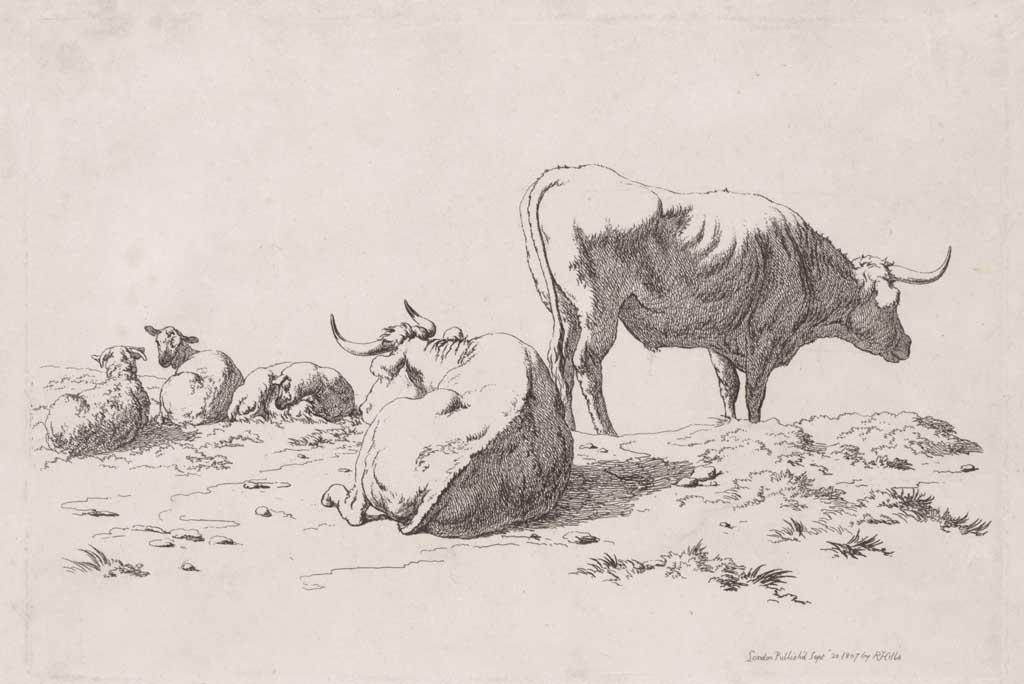 Twee koeien en drie schapen