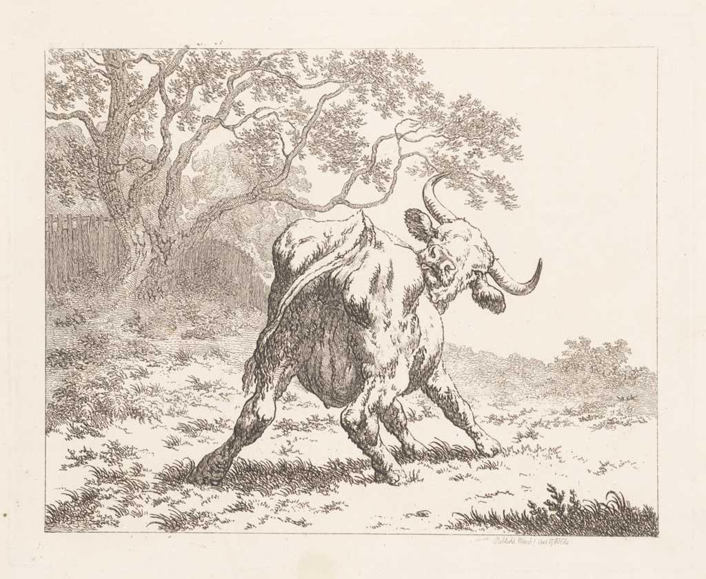 Krabbende koe