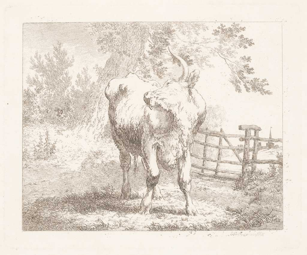 Krabbende koe bij hek