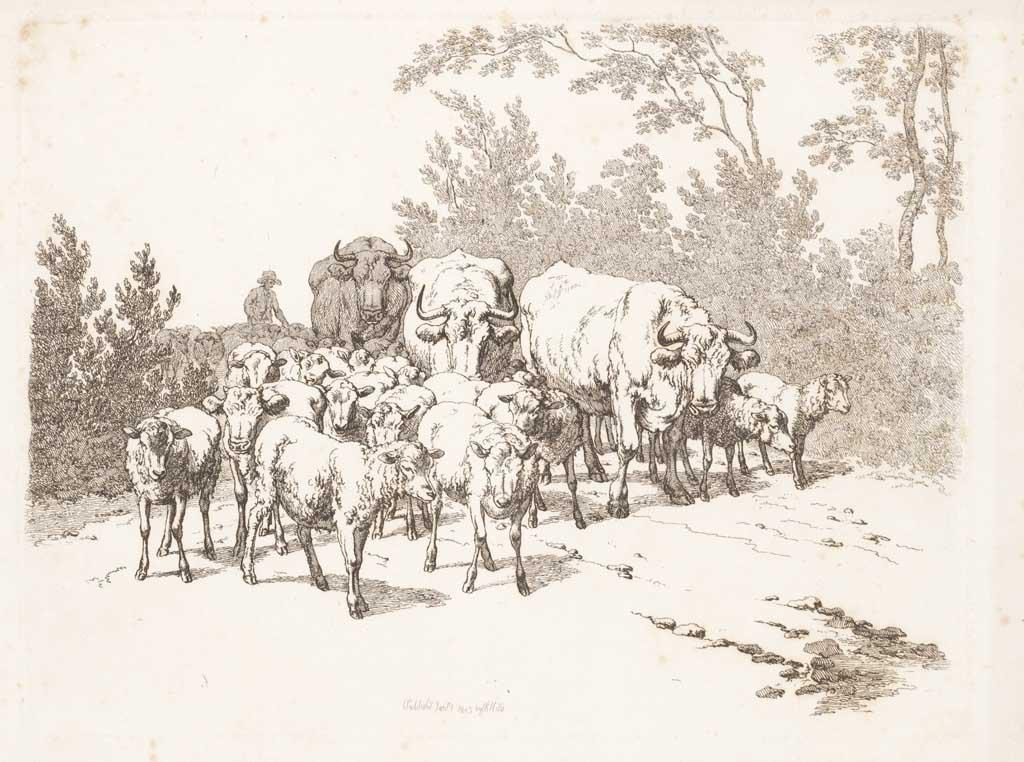 Herder drijft kudde schapen en koeien