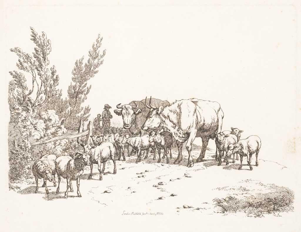 Herders drijven kudde schapen en koeien