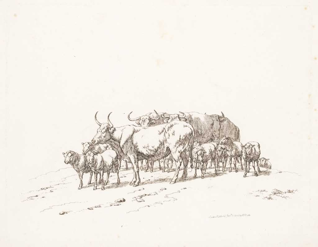 Kudde schapen en koeien
