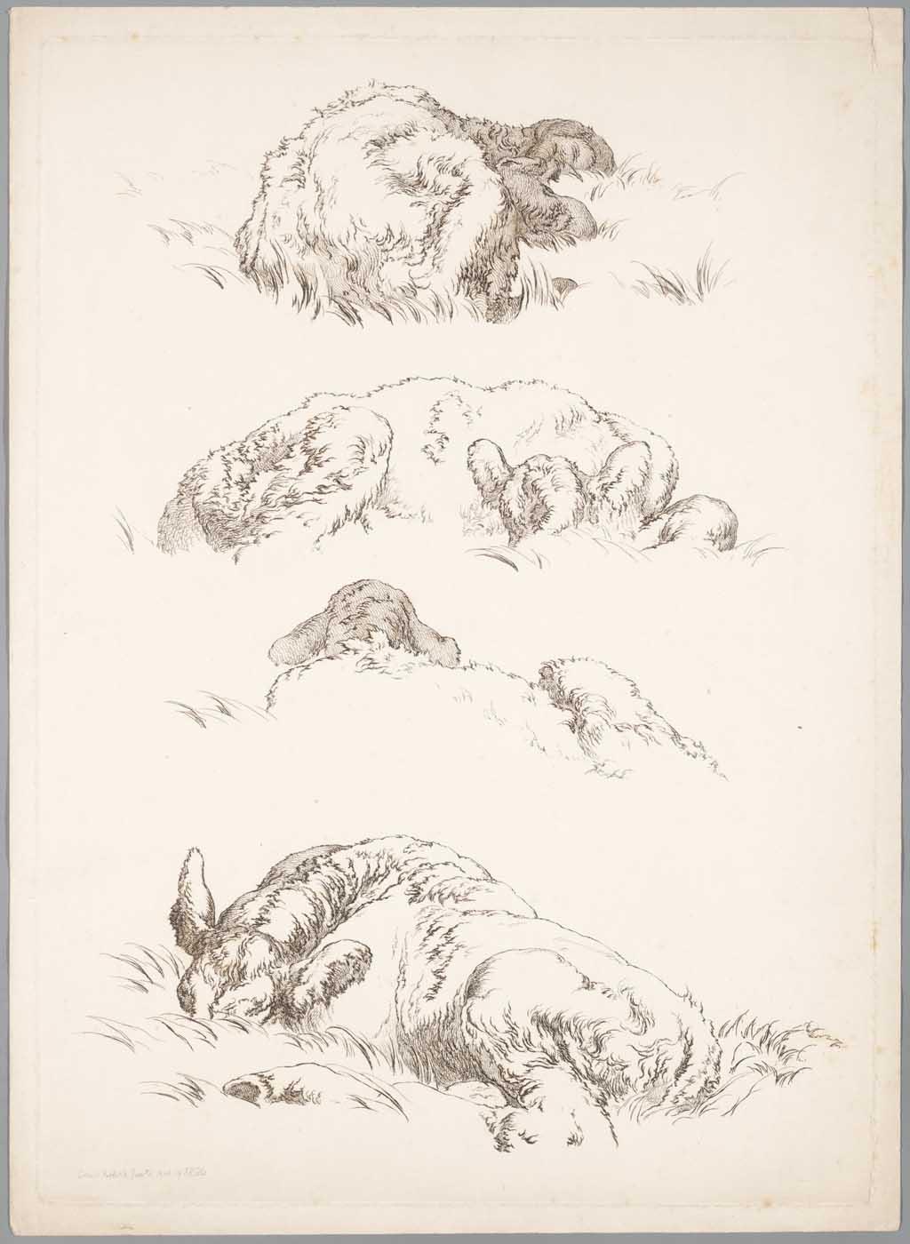 Vier studies op één plaat van een ezel