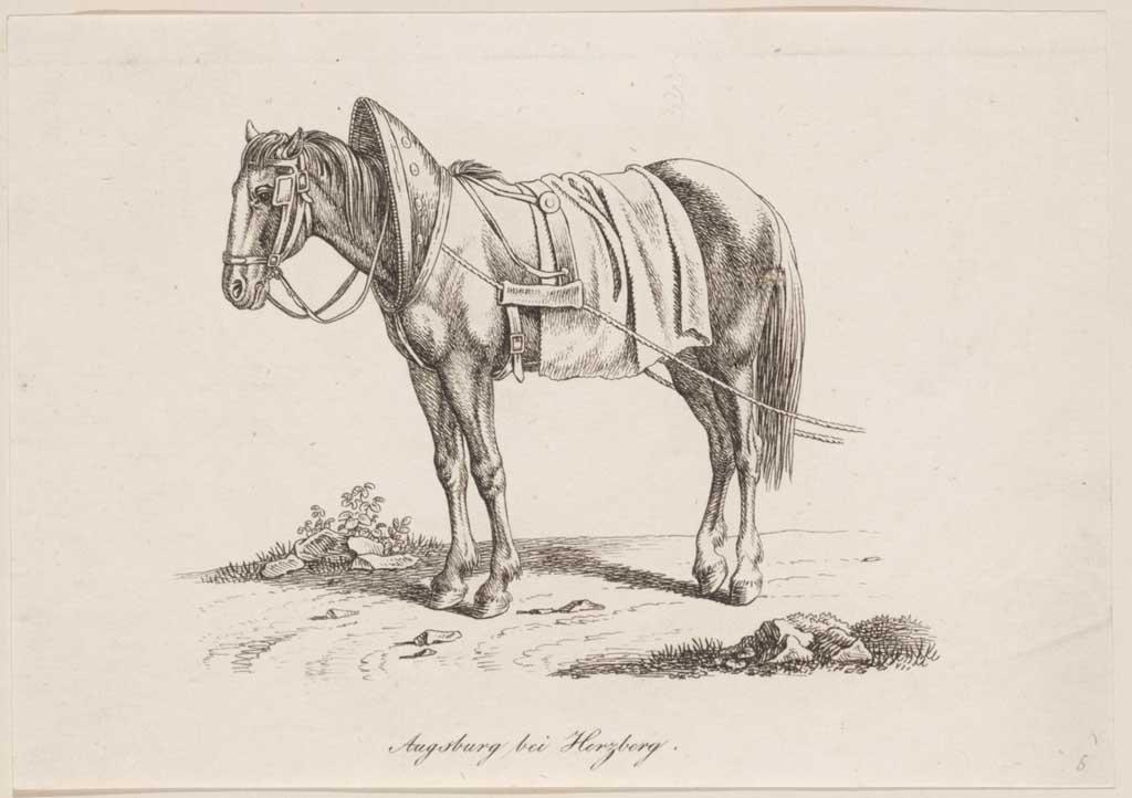 Aangespannen paard (zonder wagen)