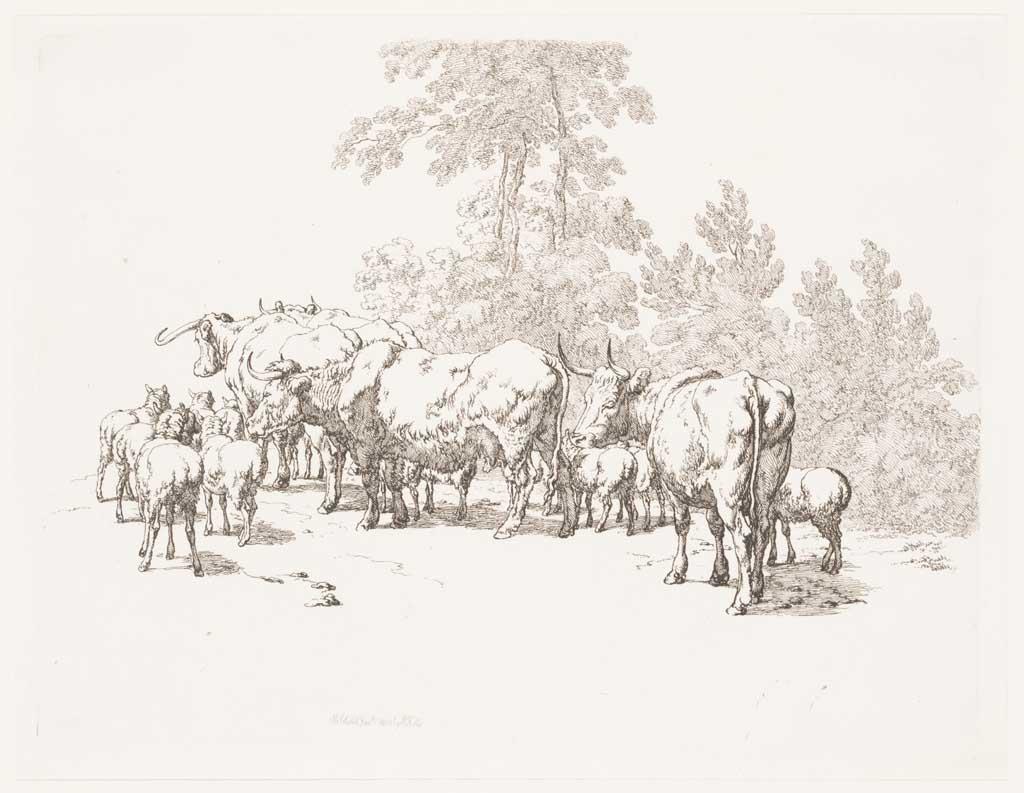 Kudde schapen en koeien van achteren gezien