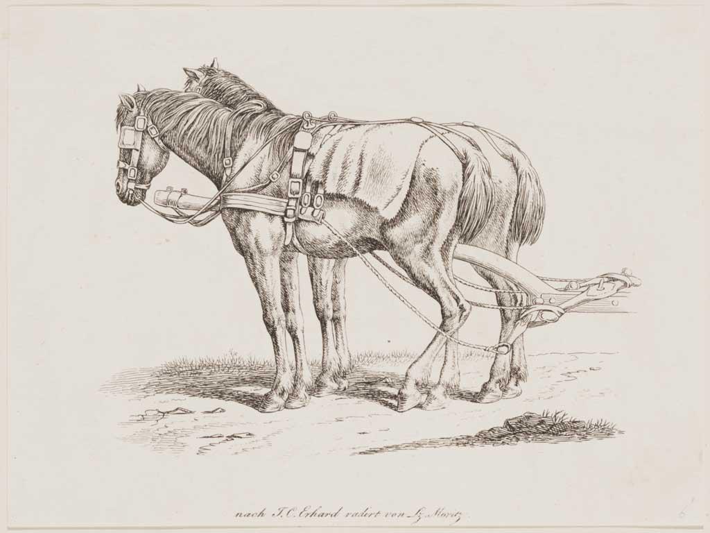 Twee aangespannen paarden (zonder wagen)