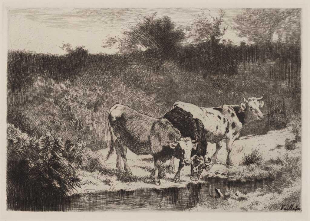 Vaches aux bords d'un ruisseau
