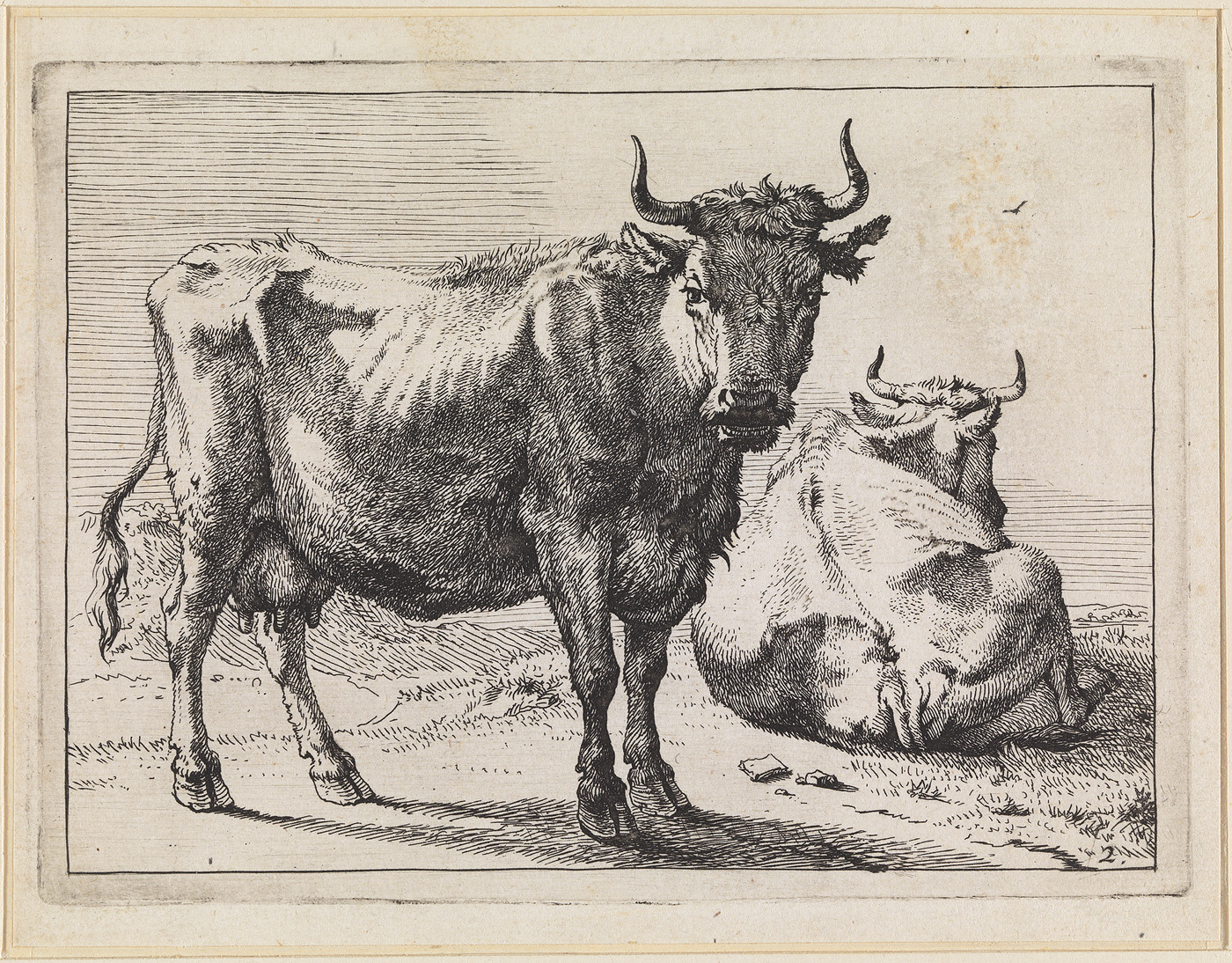Een staande en een liggende koe